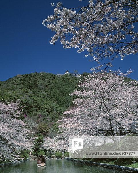 blühen Baum Kirsche Fluss Bank Kreditinstitut Banken Japan