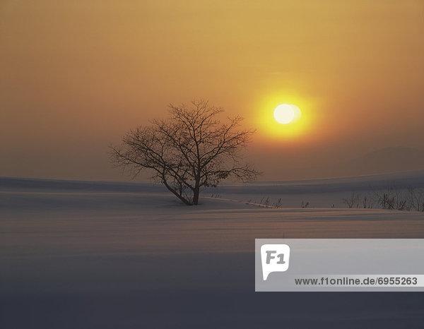 Tischset  Baum  Schnee  Feld  nackt  Hokkaido  Japan  Sonne