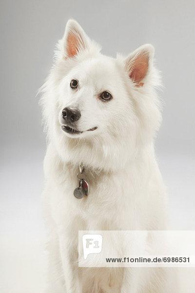 Portrait des Hundes