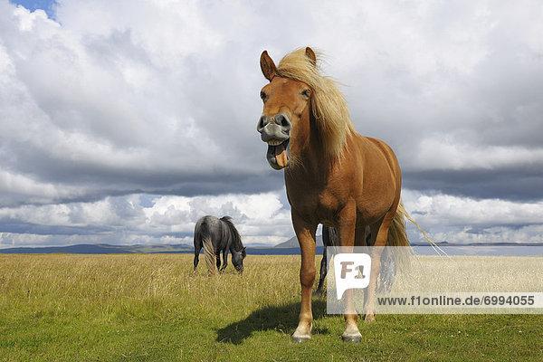 Vík í Mýrdal  Island