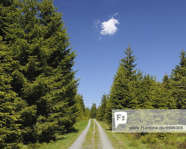 Wald  Schotterstrasse  Deutschland  Niedersachsen