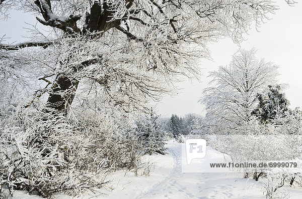 Winter Landscape  near Albstadt  Swabian Alb  Baden-Wuerttemberg  Germany