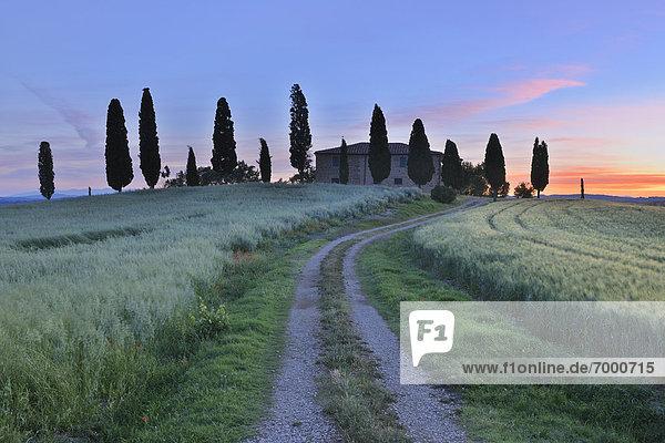 Bauernhaus Baum Fernverkehrsstraße Feld schmutzig Italien Pienza Toskana