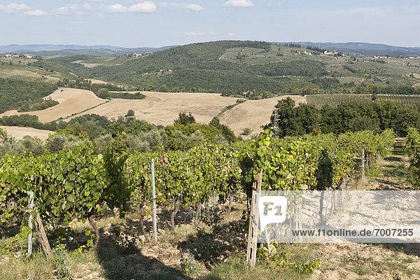 Weinberg  Toskana  Italien