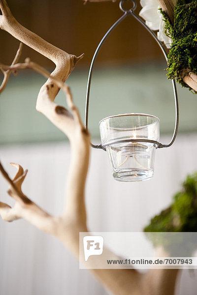 Beleuchtung  Licht  hängen  Ast  Tee