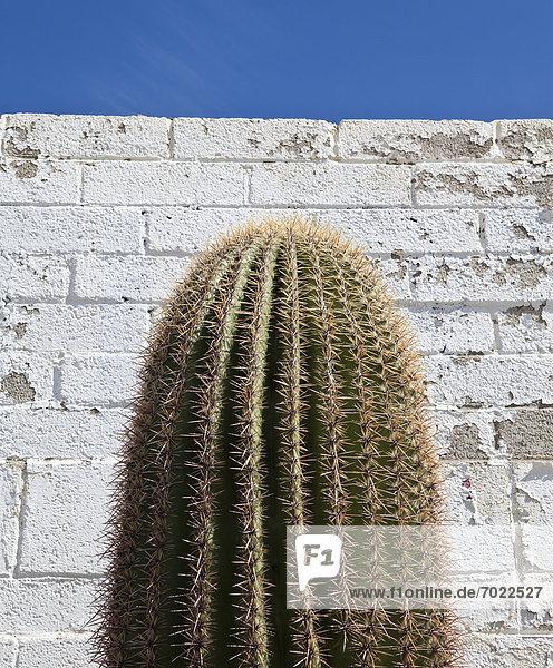 Gebäude  frontal  Kaktus