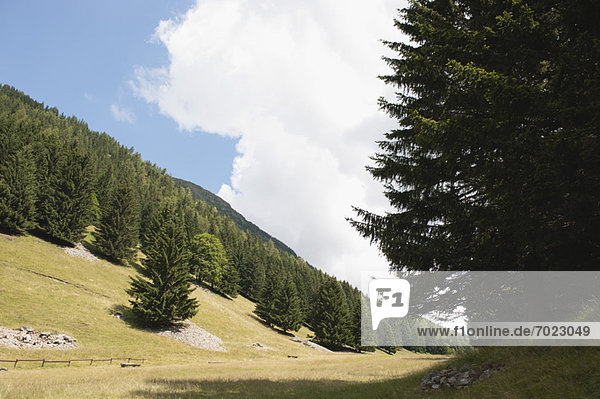 Wooded hillside Wooded hillside