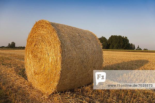 Bale von Heu im Feld