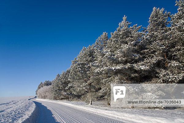 Winter  schneiden  Baum  Fernverkehrsstraße  vorwärts