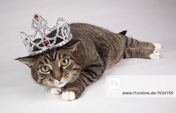 Portrait  Katze  Erwachsener  Tiara