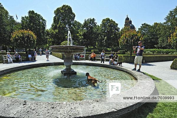 Hund in Springbrunnen,  Hofgarten,  München,  Bayern,  Deutschland,  Europa