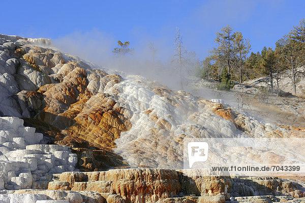 Palette Spring  heiße Quellen  Travertinterrassen  Kalkterassen  Sinterterrassen  Sinter-Terrassen  Kalksinterterrassen  Lower Terraces  Mammoth Hot Springs  Yellowstone Nationalpark  Wyoming  USA