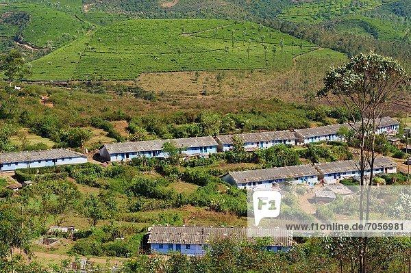 India  Kerala state  Munnar  tea plantations  Tamil tea worker village