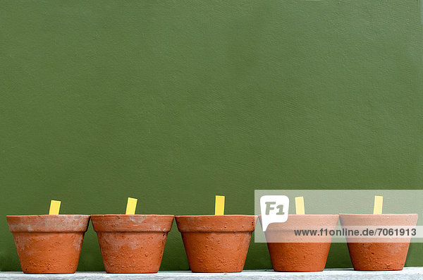 Mandatory Credit: Photo by Chameleons Eye / Rex Features (1866016e) A row of five flower and plant pots against a green wall Various - 2012