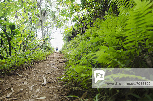 Kalalau Trail  Path in forest
