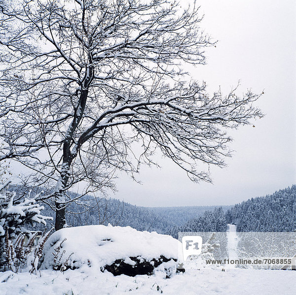 Winter landscape  Freudenstadt  Black Forest  Baden-Wuerttemberg  Germany  Europe