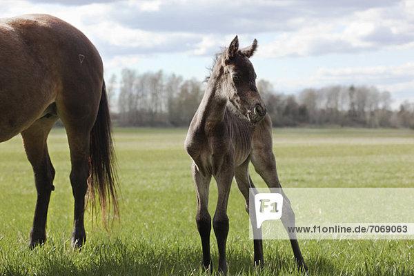 Pferde  die auf dem Rasen stehen