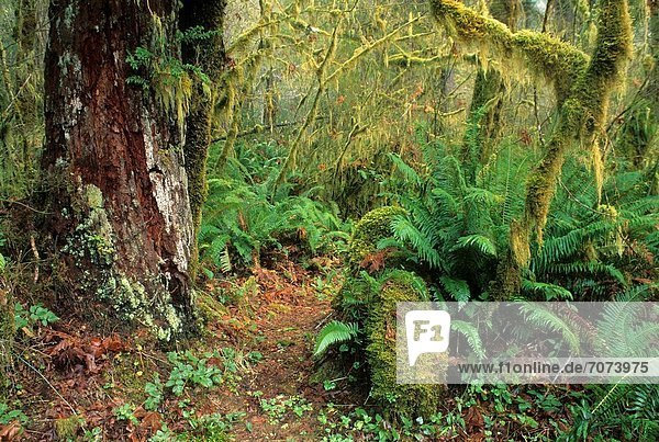 North Fork Smith River Trail  Kentucky Falls Special Interest Area  Siuslaw National Forest  Oregon