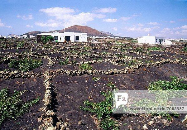 Kanaren Kanarische Inseln La Geria Spanien Lanzarote