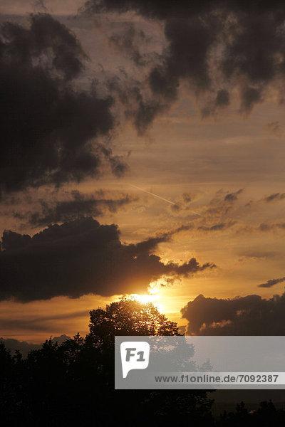Deutschland  Blick auf die Landschaft mit Baum im Abendlicht
