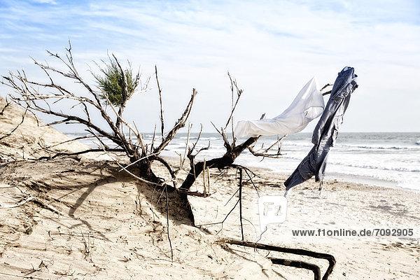 Frankreich  Kleidung hängt an trockenem Busch in Sanddüne an der Atlantikküste