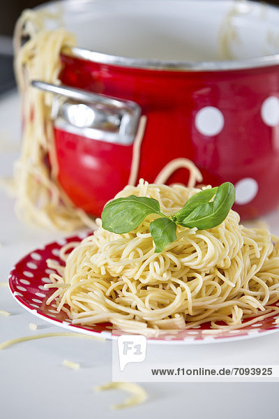 Germany  Plate of spaghetti with basil  pan in background