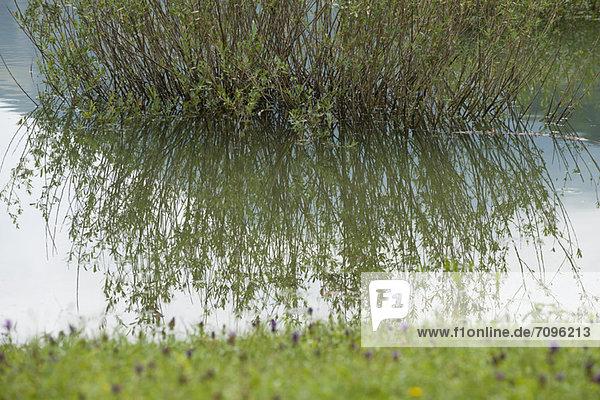 Wasser  Spiegelung  Pflanze Wasser ,Spiegelung ,Pflanze