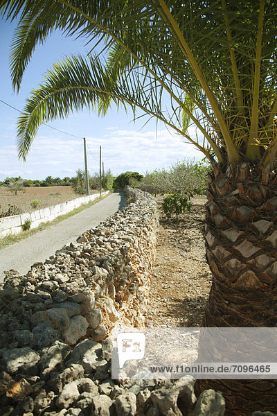 Dirt road lined by stone wall  palm tree in foreground