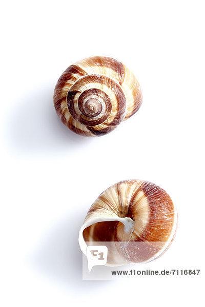 Zwei Weinbergschnecken-Gehäuse