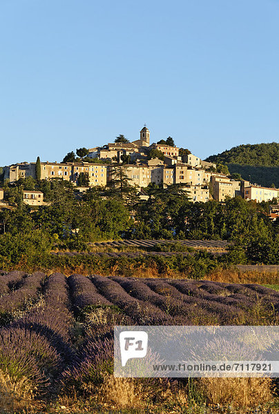 Frankreich Europa Berg Dorf Feld Banon Forcalquier Lavendel