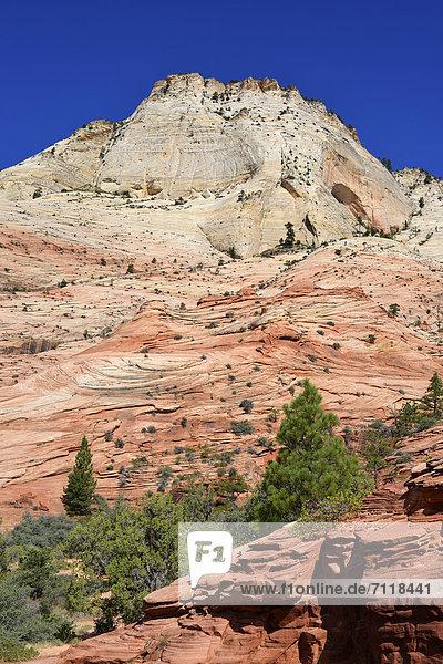 East Temple  Zion-Nationalpark  Utah  Vereinigte Staaten von Amerika  USA