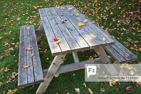 Europa Urlaub britisch Großbritannien Reise Herbst Laub Tisch England Tourismus