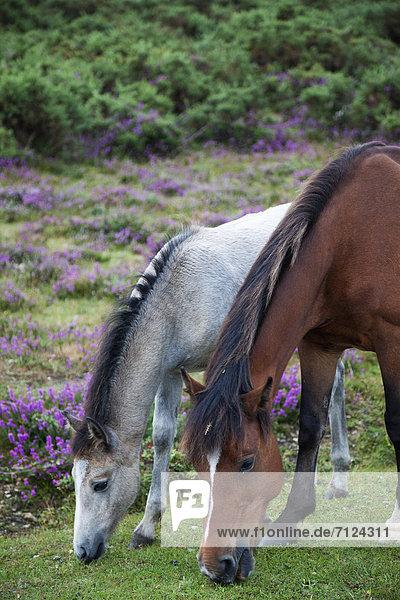 Europa  britisch  Großbritannien  Wald  England  Hampshire