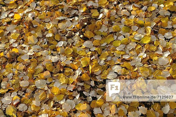 Farbaufnahme Farbe Muster Konzept gelb Boden Fußboden Fußböden Herbst Laub Schnittmuster