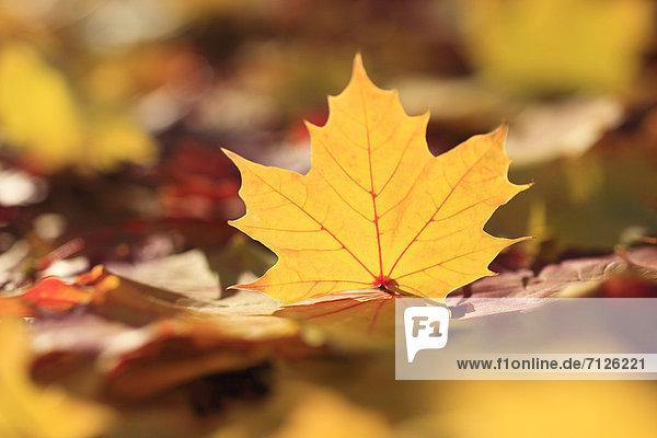 Makroaufnahme Detail Details Ausschnitt Ausschnitte Farbaufnahme Farbe Farbe Farben Helligkeit Europa drehen Konzept gelb grün Close-up Herbst Laub Färbemittel Schweiz