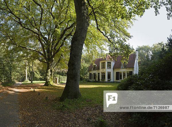 Europa Wohnhaus Baum Wald Holz Herbst Niederlande