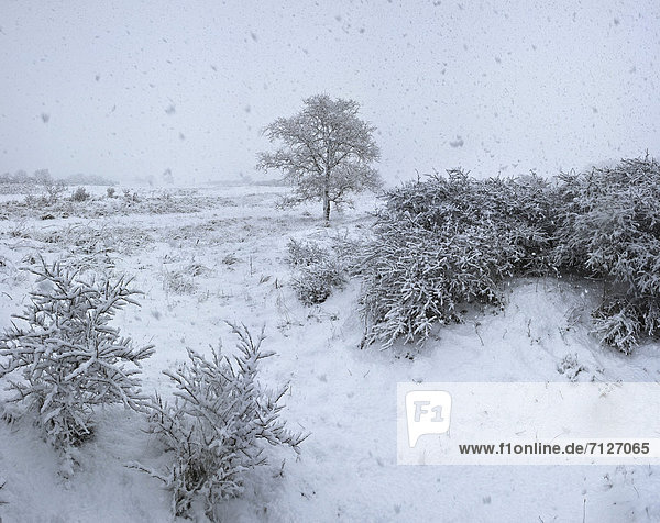 Netherlands  Holland  Europe  Egmond Binnen  Landscape  Field  Meadow  Trees  Winter  Snow  Ice  snowfall  snow flurry  Lonely tree