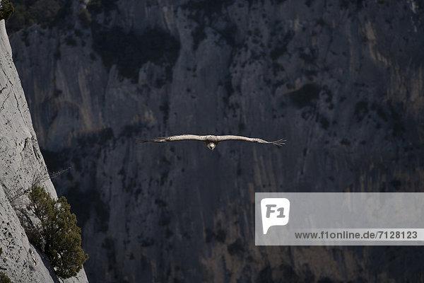 Frankreich  Europa  Vogel  Provence - Alpes-Cote d Azur  Schlucht  Adler Frankreich ,Europa ,Vogel ,Provence - Alpes-Cote d Azur ,Schlucht ,Adler