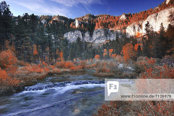 Vereinigte Staaten von Amerika USA Farbaufnahme Farbe Amerika Ereignis Laub Nordamerika Bach Wasserfall National Forest Nationalforst South Dakota