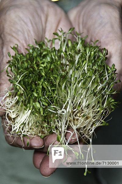 Lebensmittel  Essen und Trinken  Gesundheit  grün  Gemüse  keimen  Ewigkeit  vegan  vegetarisch