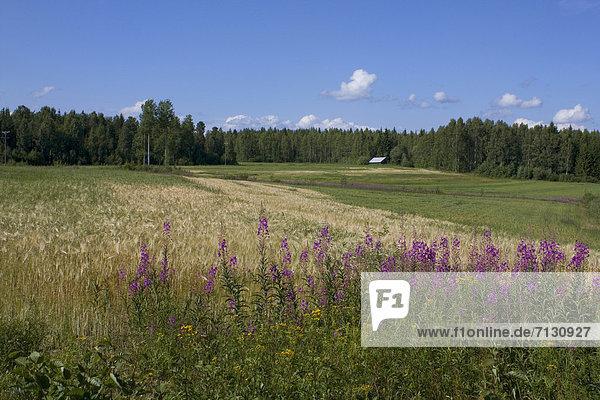 Getreide Urlaub Blume Landschaft Landwirtschaft Reise Wald Pflanze Holz Wiese Agrarland Finnland Nordeuropa Skandinavien