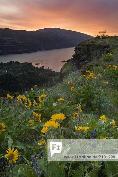 Wasser  Blume  Sonnenaufgang  Fluss  Wildblume  Schlucht  Columbia River  Oregon