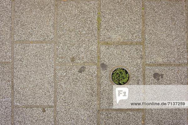 Vegetation in einem Bürgersteig
