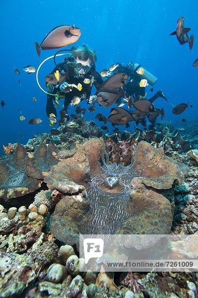 Fisch Pisces Muschel Südostasien Asien Indonesien Sulawesi Einhorn