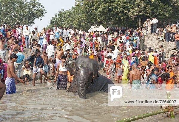 nahe  waschen  Fluss  Rind  Gast  Elefant  Ganges  Asien  Bihar  bevölkert  Indien