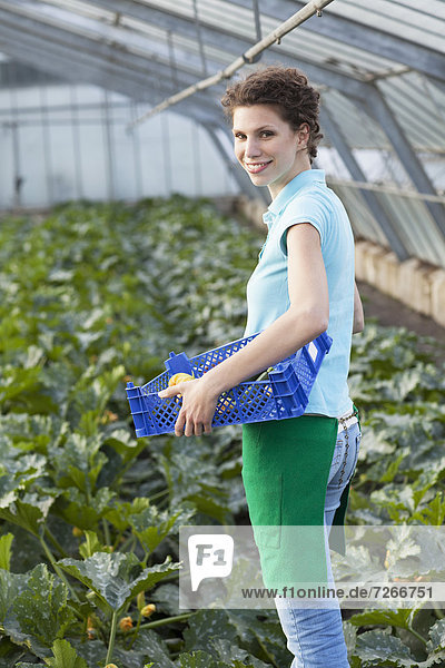 young woman working in greenhouse collecting courgettes