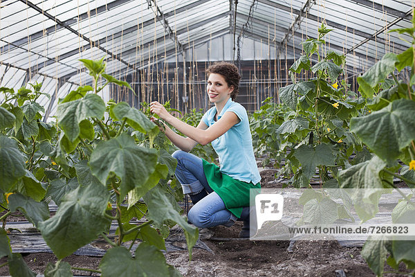 young woman working in greenhouse growing tomatoes