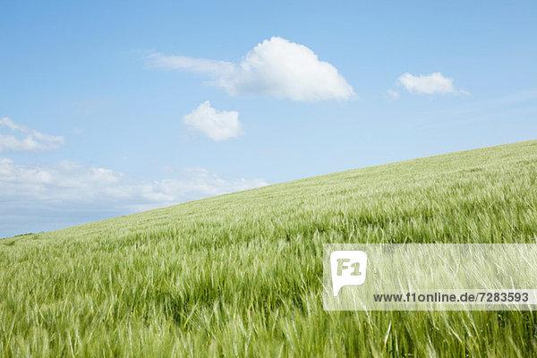 Hügel mit langem Grasfeld  Padstow  Cornwall  England  UK