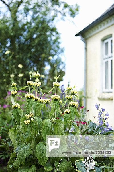 Blumen wachsen im Garten