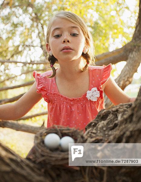 Vogelnest Nest sehen klein 5-9 Jahre 5 bis 9 Jahre Mädchen